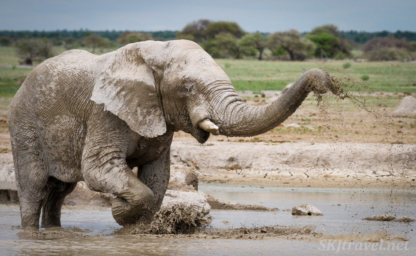 Elephant playing in a waterhole, Nxai Pan. Botswana.