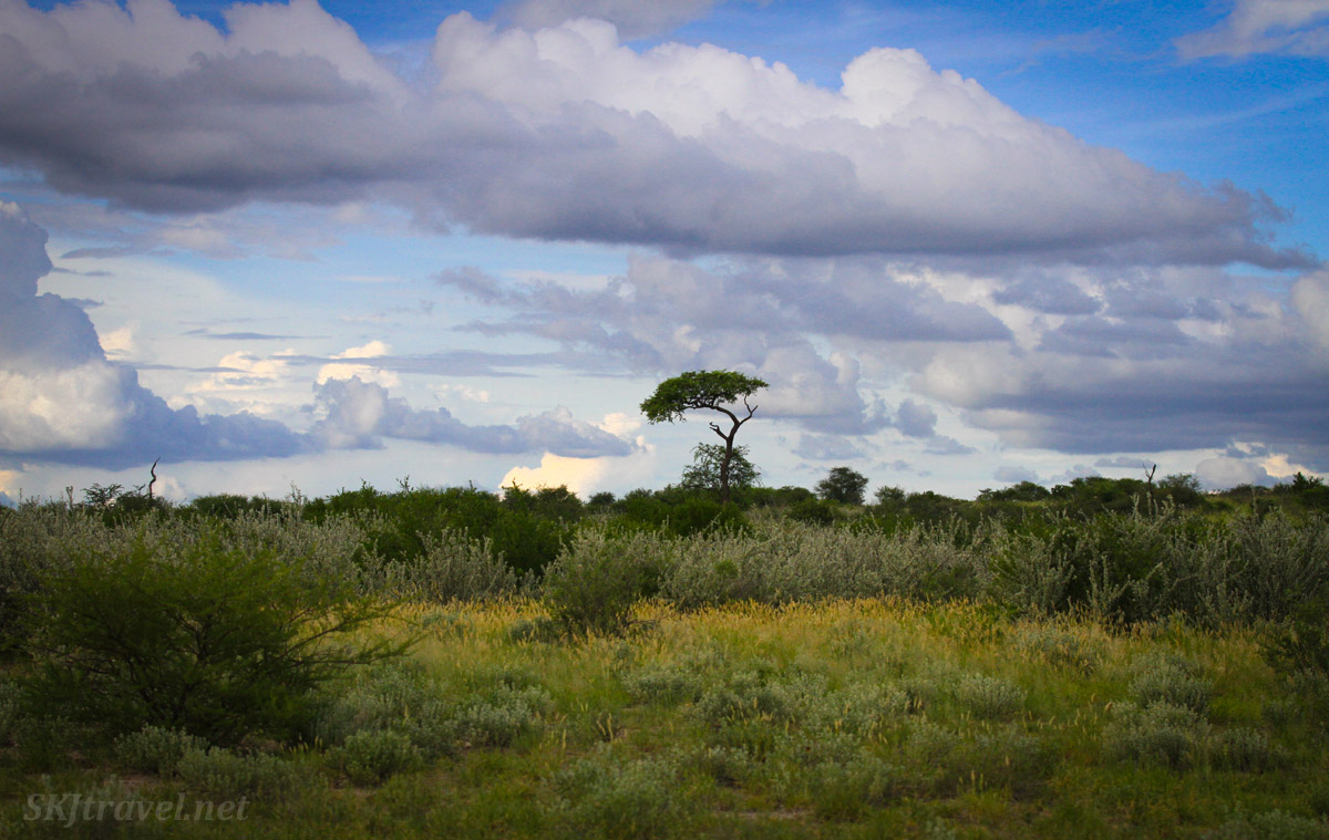 The rainy green season inside the Central Kalahari Game Reserve national park, Botswana.