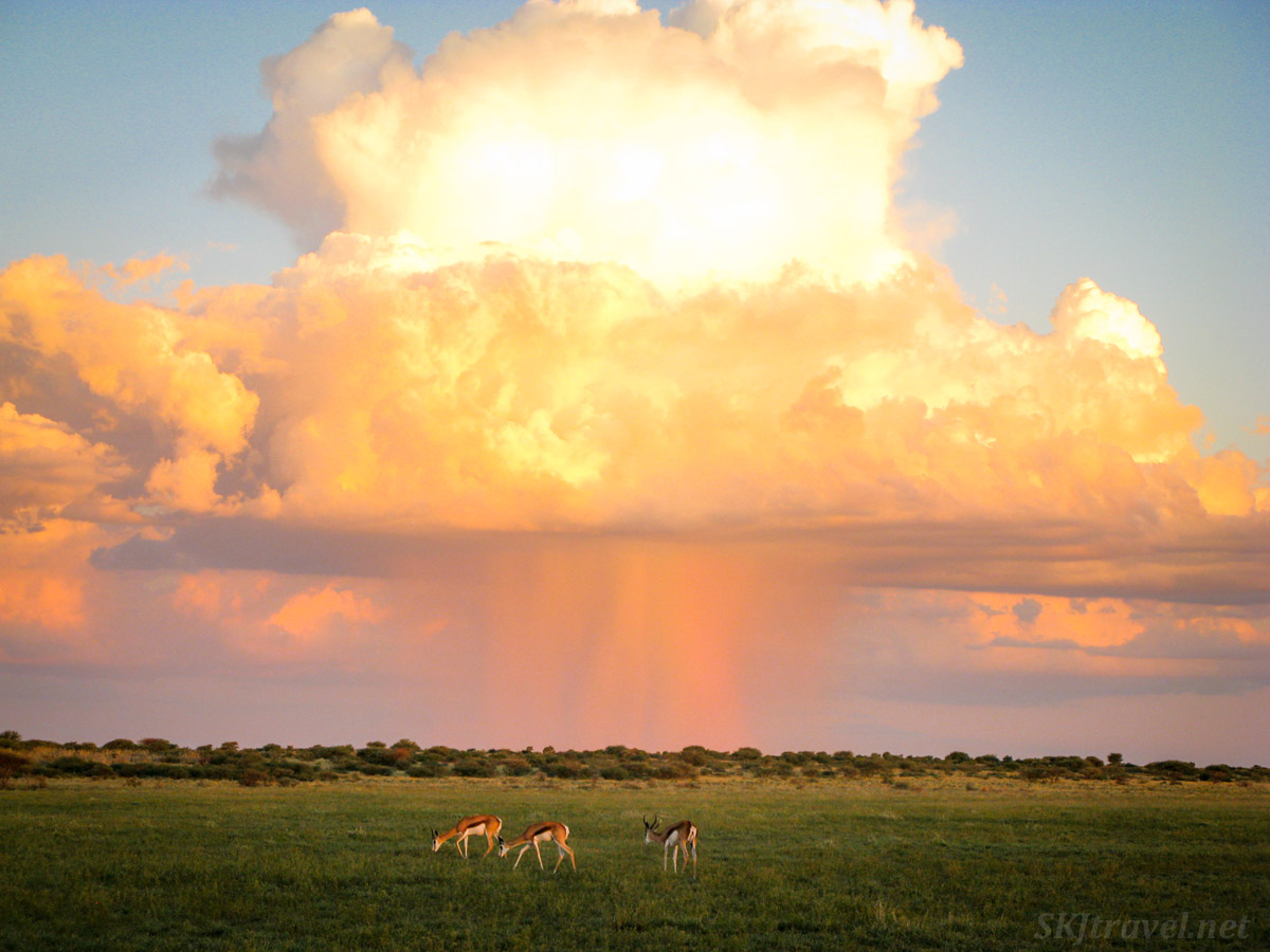 Thundercloud and rain at sunset in Central Kalahari Game Reserve, Botswana.