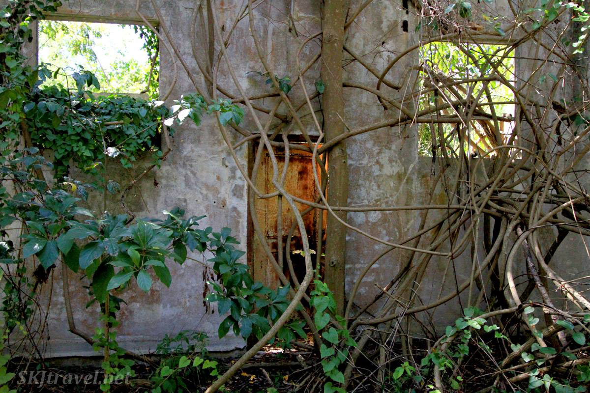 Inside the ruins of the 1860s processing mill, overgrown by the jungle, at Central Grande Playa sugar mill, Esperanza, Vieques, Puerto Rico.