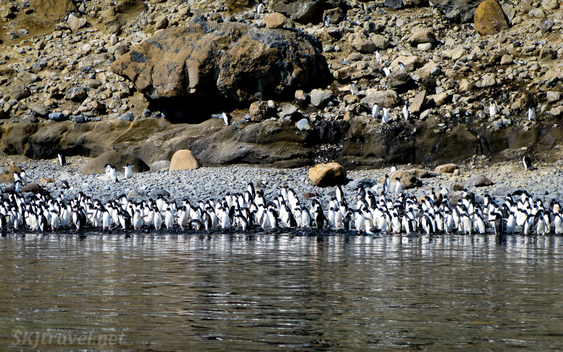 Penguin colony on Brown Bluff, Antarctic Sound.