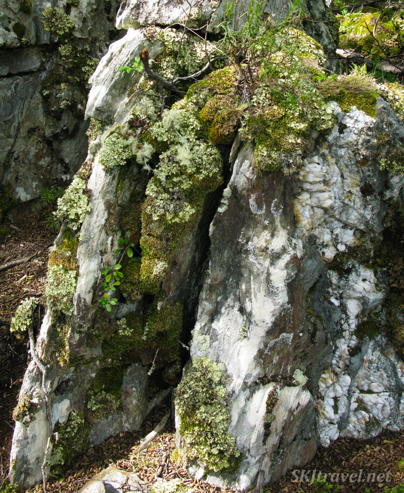 Moss covered rock. Tierra del Fuego National Park, Argentina.