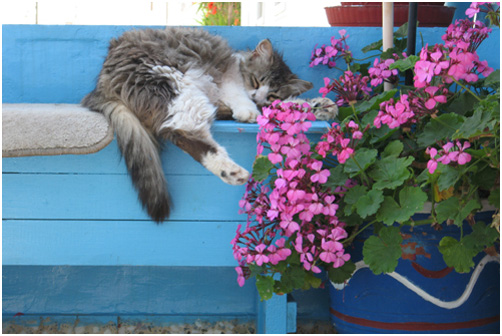 Kitty napping on Hydra Island, Greece.