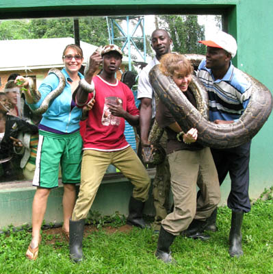 Staggering beneath the weight of a giant python on my shoulders ... and other snakes wrapped around the arms of other zookeepers. UWEC, Uganda.