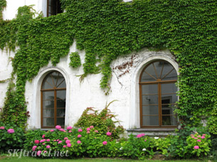 Ivy-covered white building.