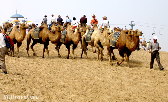 2 lines of camels, one with people on them