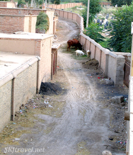alley beside cemetery with livestock standing in it