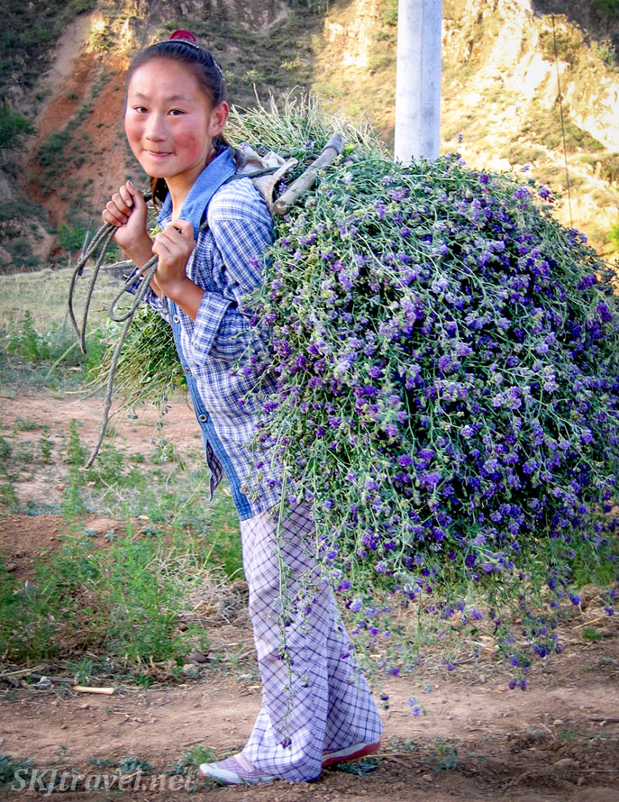 Young Chinese peasant girl, Pan-Pan, bringing fresh-cut hay home for the sheep. Dang Jia Shan village, Shaanxi Province, China.