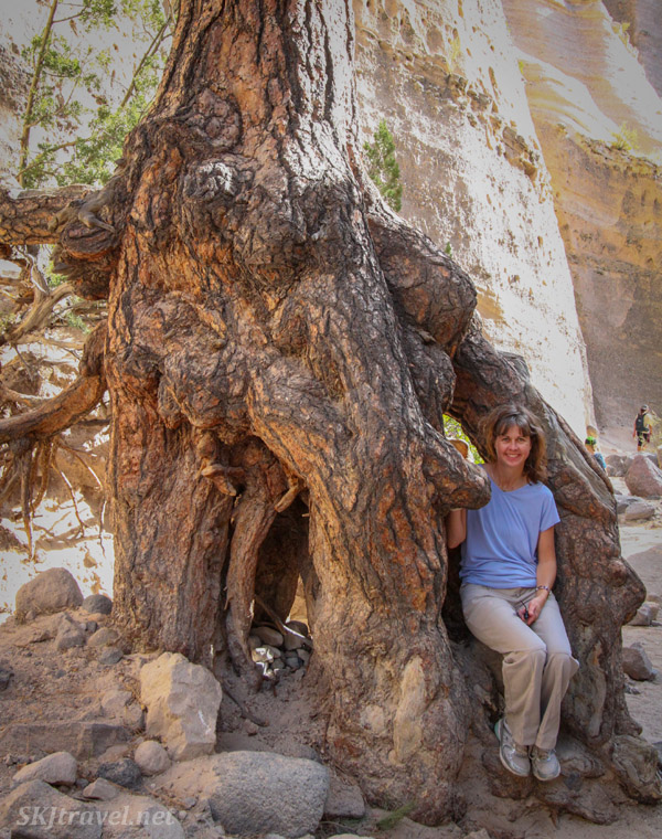 Shara sitting in a giant tree. Kasha-Katuwe Tent Rocks National Monument, New Mexico.