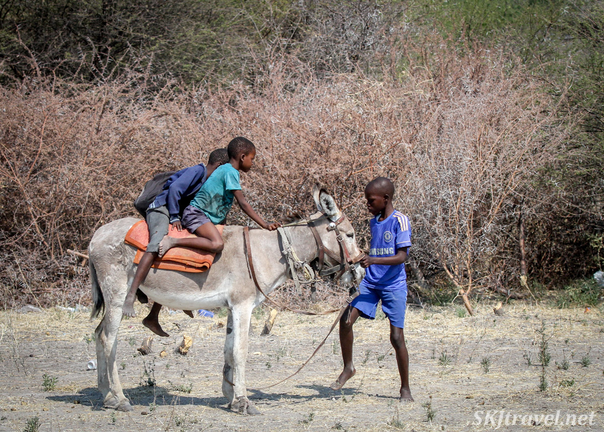 Barefoot children along the road in Botswana, two riding a white donkey and one holding the reins among acacia thorns.
