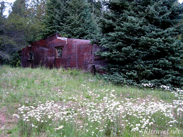 Abandoned, rusting mining building in a field of daisies. Gamble Gulch Road, Rollinsville, Colorado.