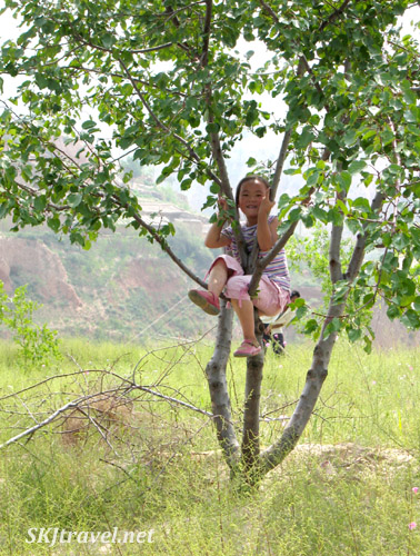 Little girl sitting in a tree. Dang Jia Shan village, Shaanxi Province, China.