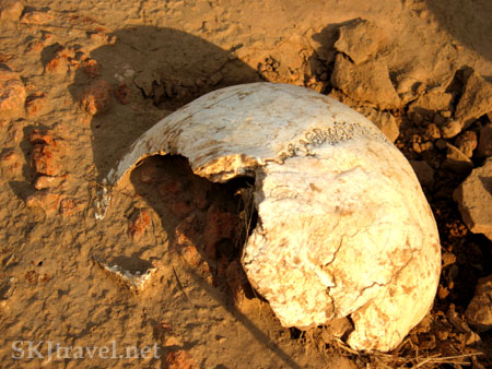 The top of a skull buried in a riverbed in China. Photo by Shara Johnson