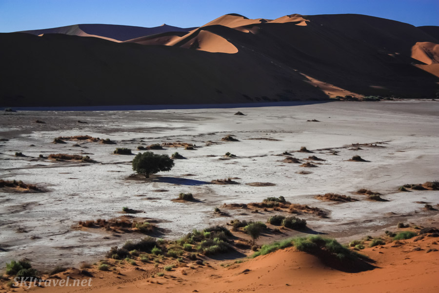 Alien landscape of the Dead Vlei, Sossusvlei, Namibia.