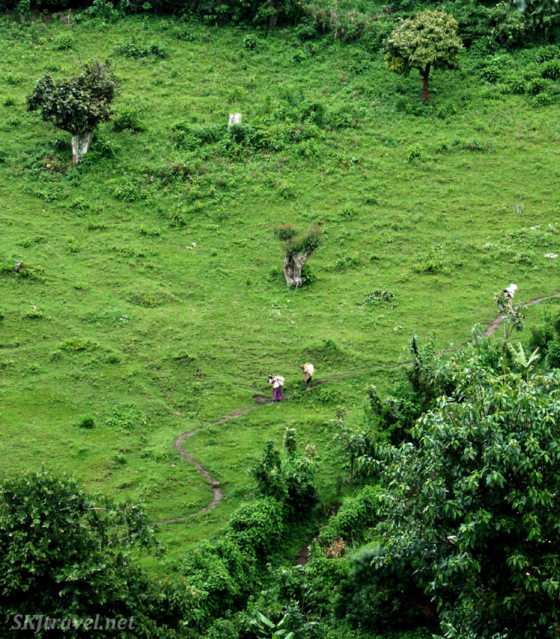 Women walking home with sacks of harvested produce from their fields on steep mountainside of lower Rwenzori range in Uganda.