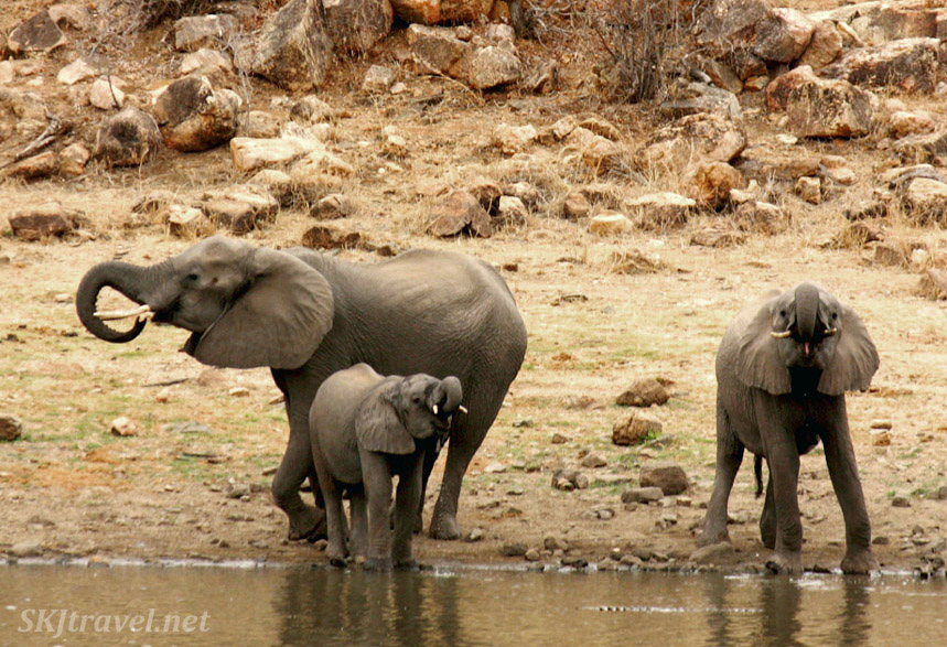elephant trio at a lake