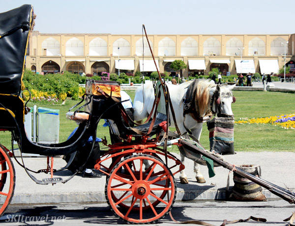 Horse munching a snack while waiting for clients in the Imam Square, Isfahan, Iran.