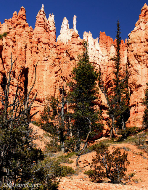 Tall red hoodoos with white caps and clear blue sky.