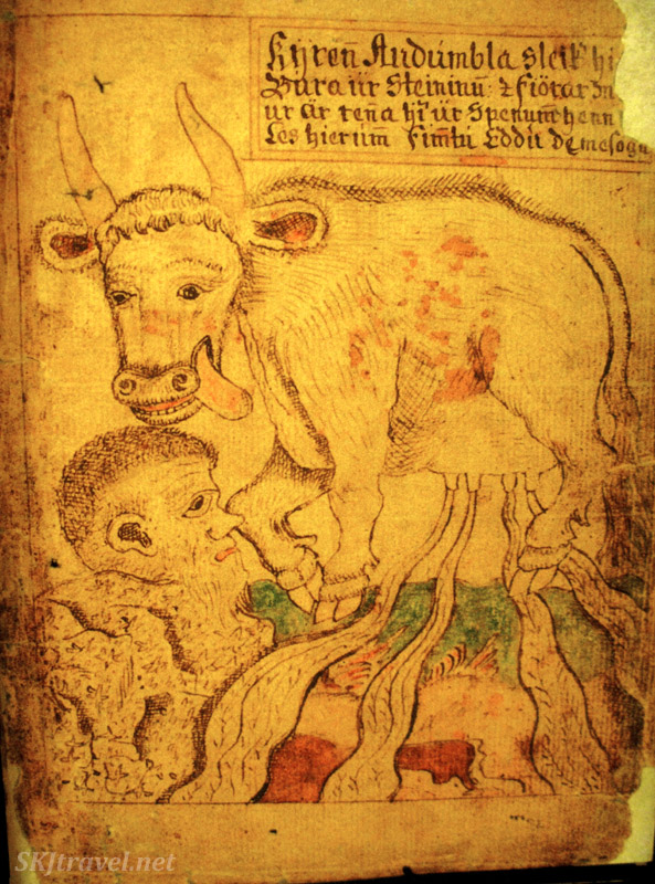 A cow with very full udders! Page from a medieval Icelandic saga manuscript, in the Culture House, Reykjavik, Iceland.