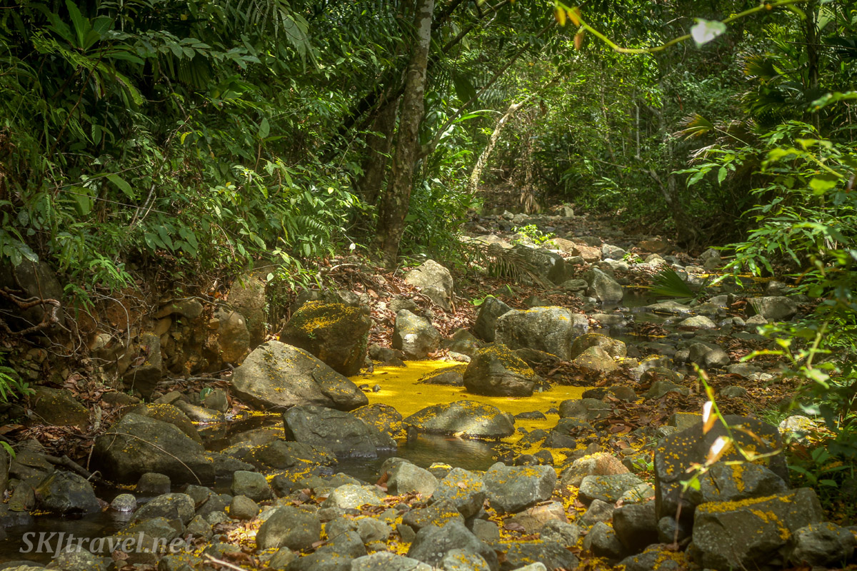 Creek full of tiny yellow flowers in the jungle, Armila, Panama.