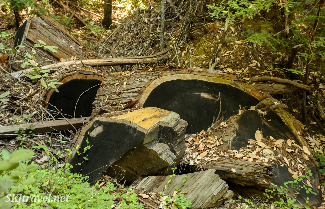 Fallen redwood tree with blackened core of trunk. Big Basin Redwoods State Park, California.