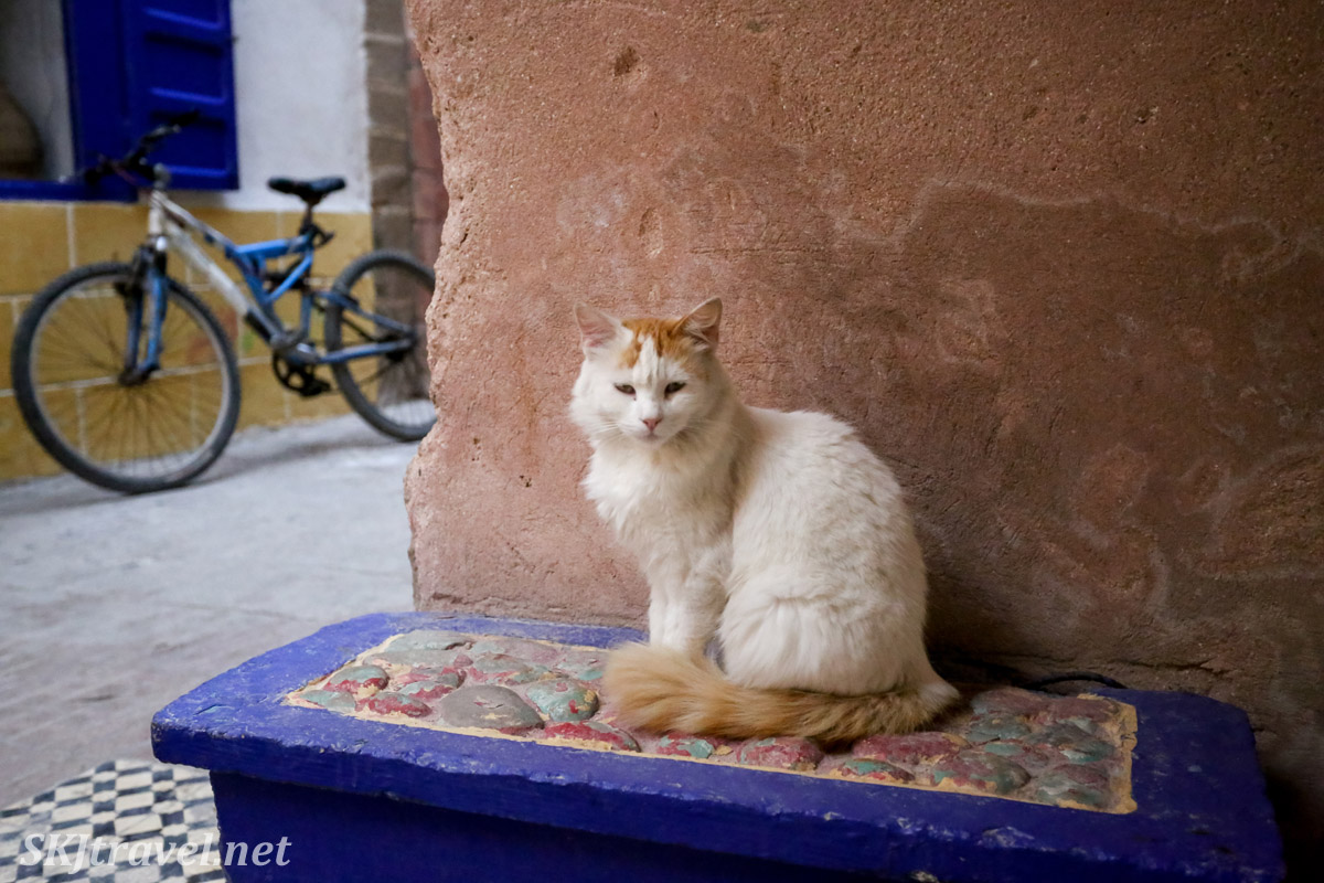 Cat in Essaouira, Morocco.