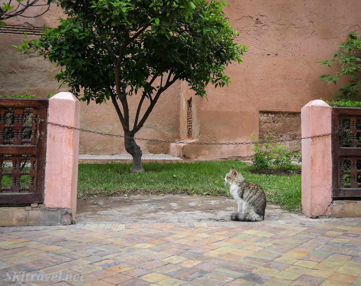 Cat in the courtyard of Saadian Tombs, Marrakech, Morocco.