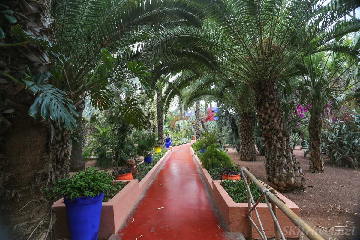 Pathway through Jardin Majorelle, Marrakech, Morocco.