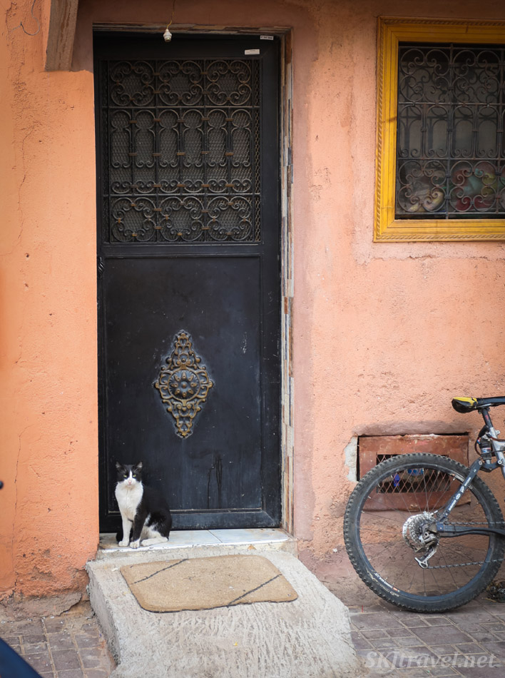Cat in front of a door in residential area of Marrakech medina, Morocco.
