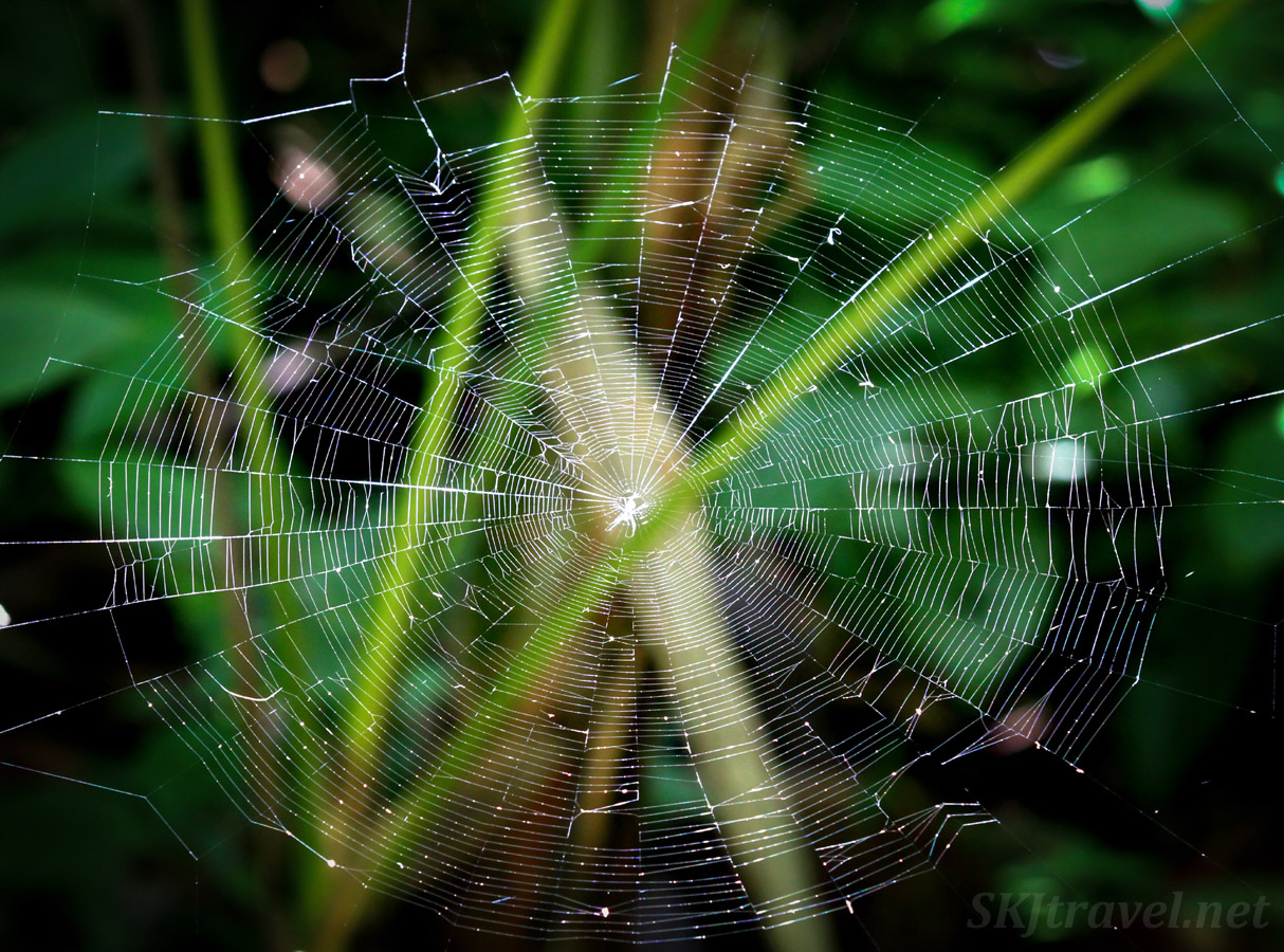 Spider web in a shaft of sunlight. El Yunque National Forest, Puerto Rico.