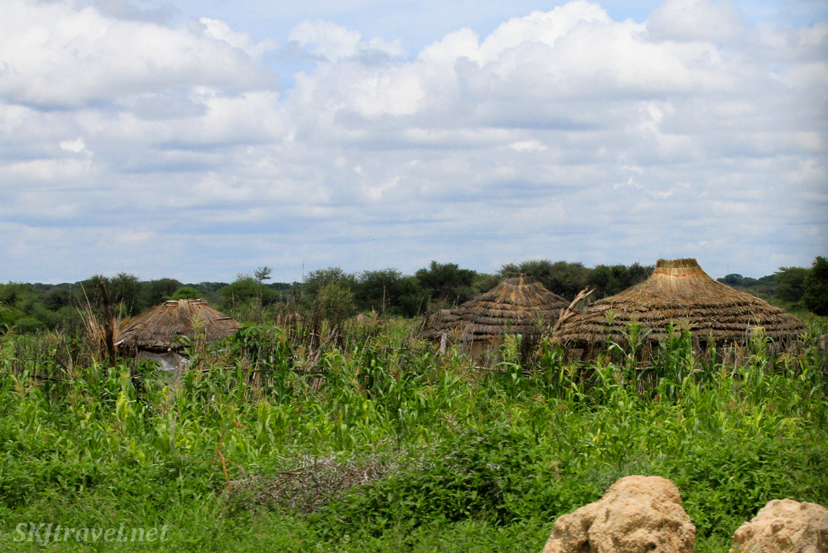 Storage huts in the mahango fields, northern Namibia.