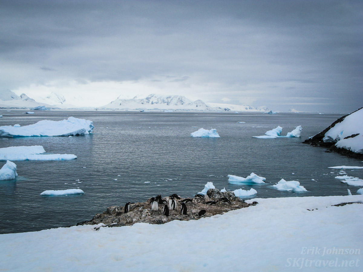 Penguins nesting on the first rock outcroppings of summer. Orne Island, Antarctica.