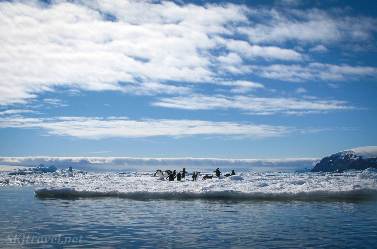 Penguins on an iceberg, Brown Bluff, Antarctic Sound.