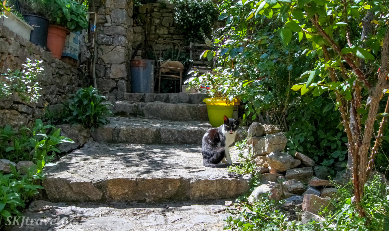 Kitty cat on the stone steps of house in Anavatos, Chios Island, Greece.