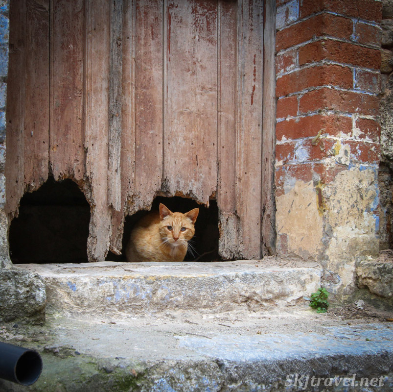 Cat peeking out from a hole in a doorway, Mesta, Chios, Greece.