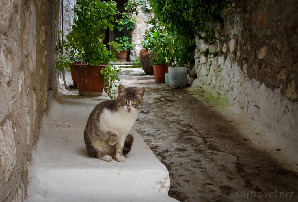 Cat in a narrow alleyway in Mesta, Chios Island, Greece.