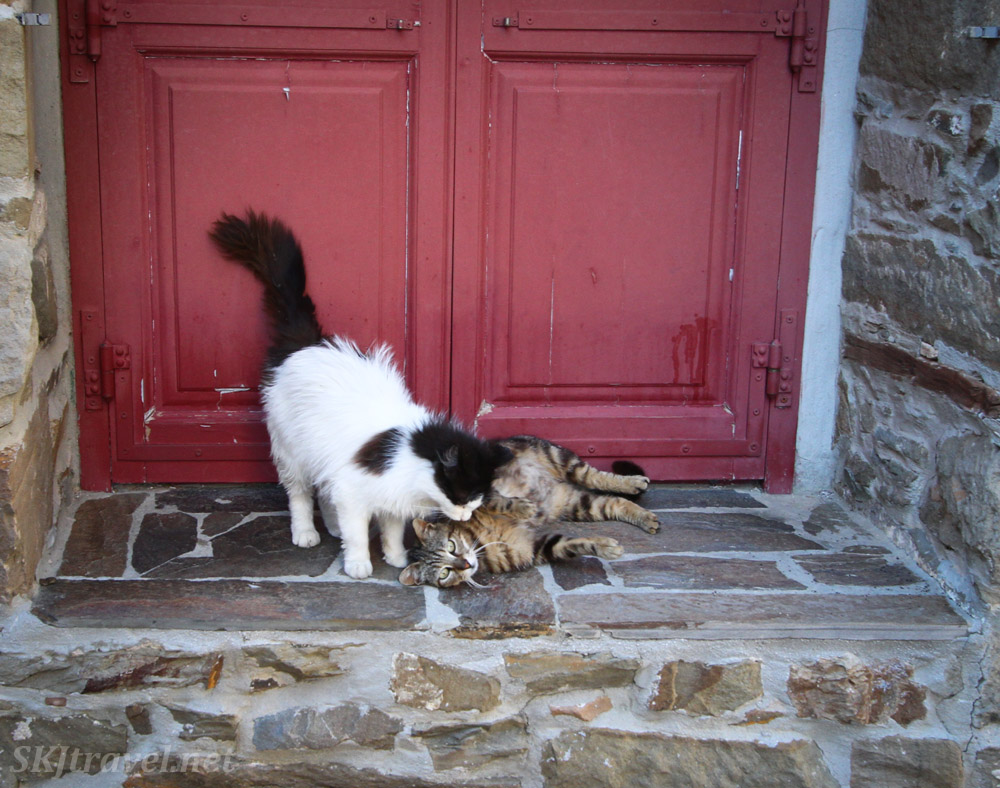 Cats playing at a red door in Volissos, Chios Island, Greece.