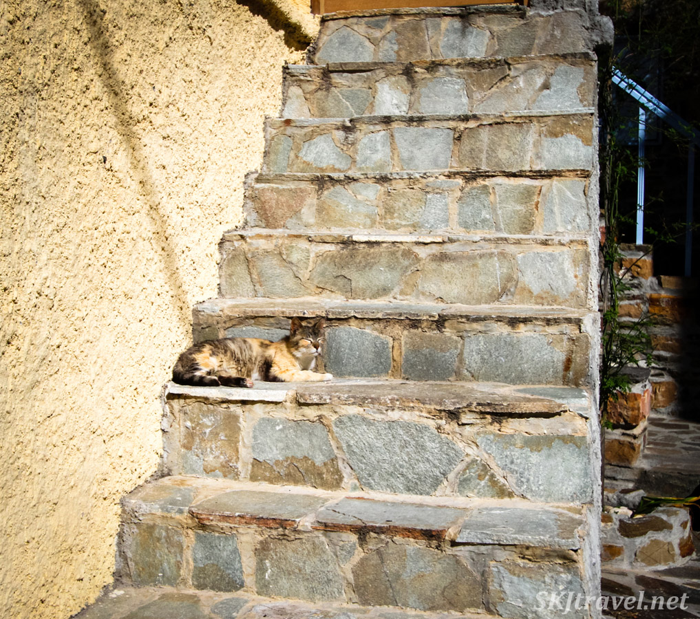 Kitty cat on the steps of a house at the top of the hill in Volissos, Chios Island, Greece.