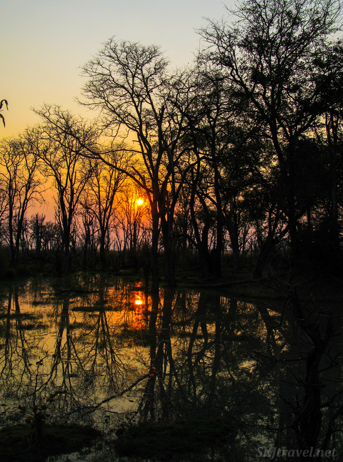 The orange sun rising above a pond just past dawn in Moremi Game Reserve, Botswana.