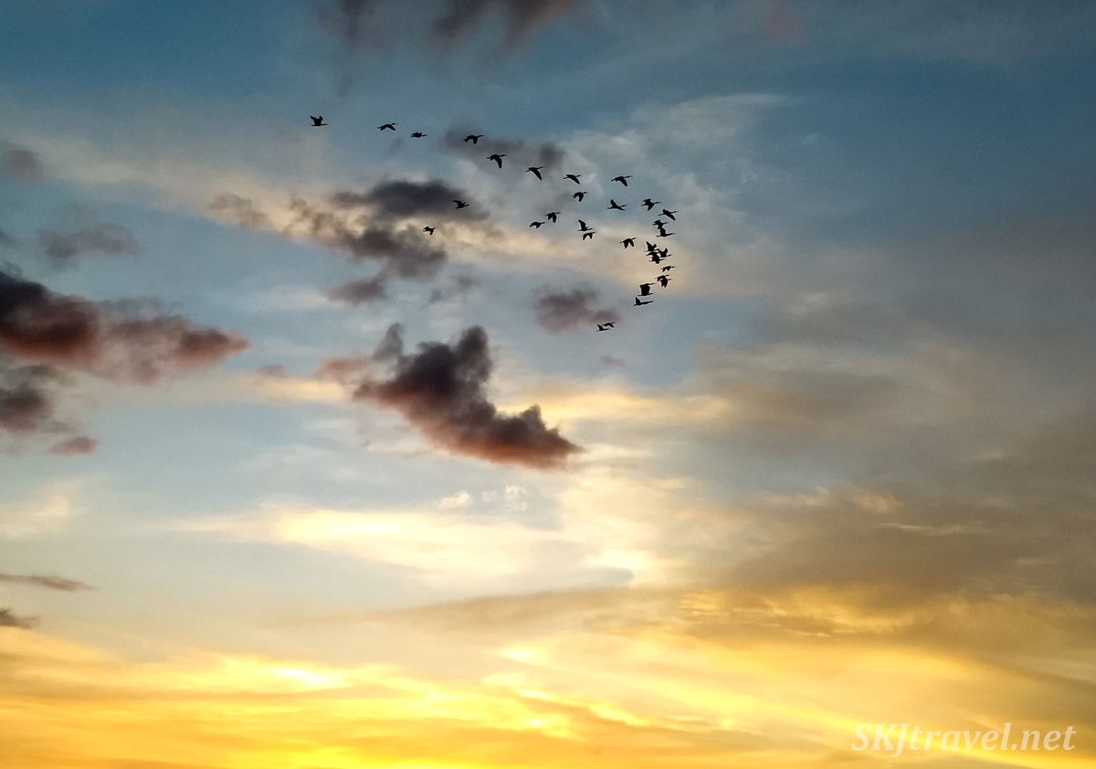 Birds flying over Tamarindo Beach at sunset, Costa Rica.
