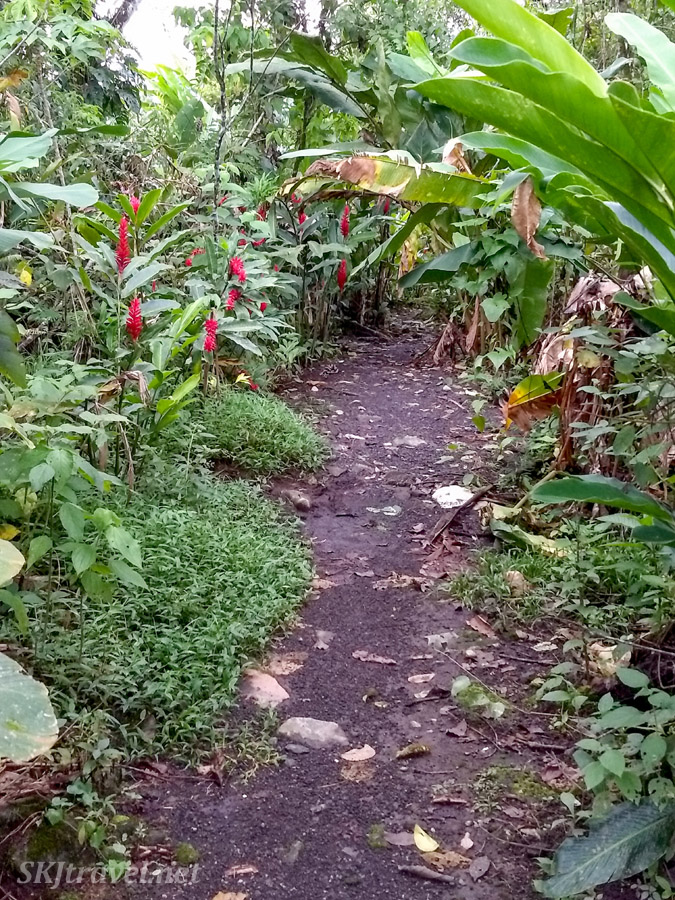 Gravel path maintained through the Bogarin nature reserve, La Fortuna, Costa Rica.