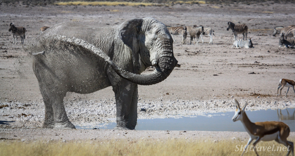Elephant spraying himself with muddy water, Etosha National Park, Namibia.