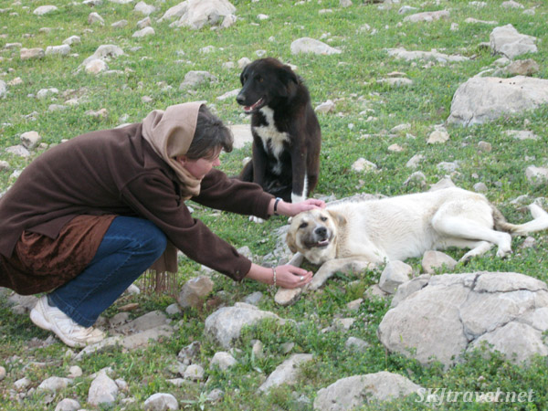 Petting the nomad dogs. Zagros mountains, Iran.