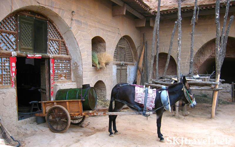 Donkey harnessed to water barrel in courtyard of a yao, China.
